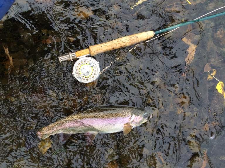 YAKIMA RIVER REPORT 10/31/31