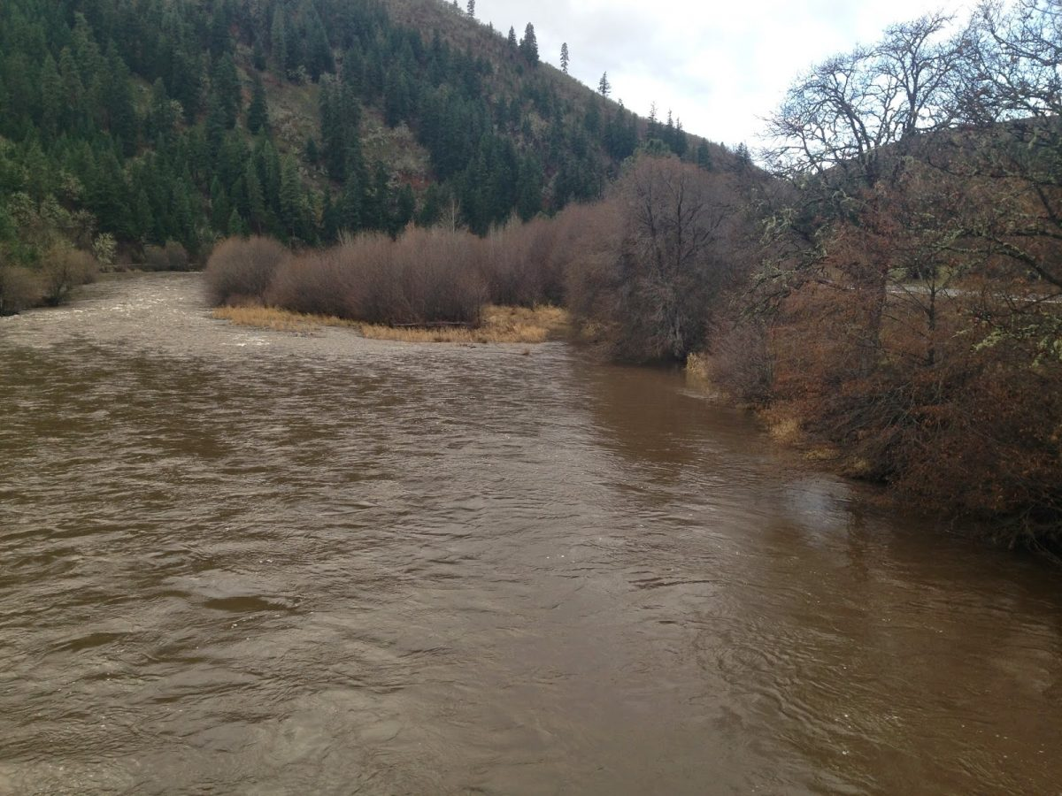 KLICKITAT RIVER REPORT 11/29/14