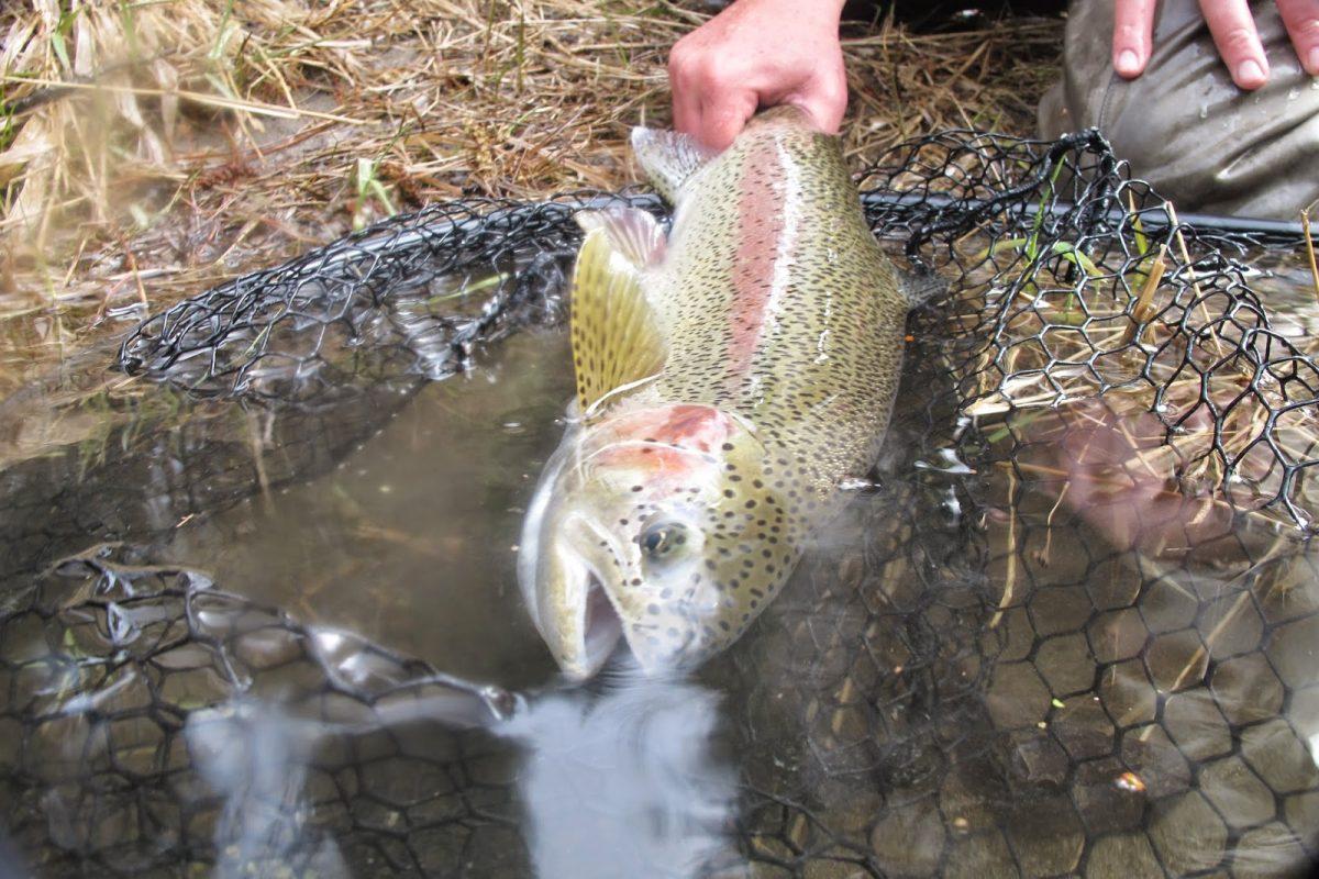 YAKIMA RIVER REPORT – 3/29/15