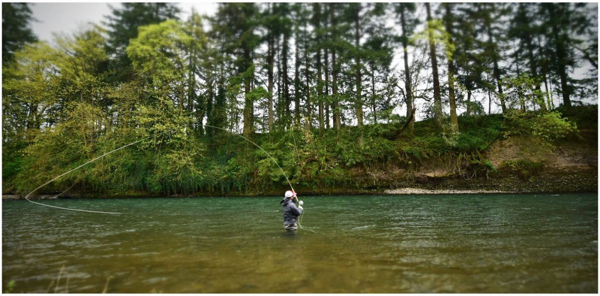 WINTER STEELHEAD REPORT – 4/10/15