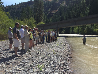 KLICKITAT RIVER REPORT   8/18/15