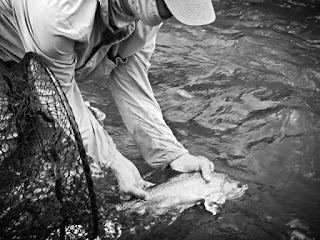 YAKIMA RIVER REPORT   –   8/30/15