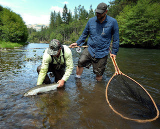 KLICKITAT RIVER REPORT   –  7/12/16