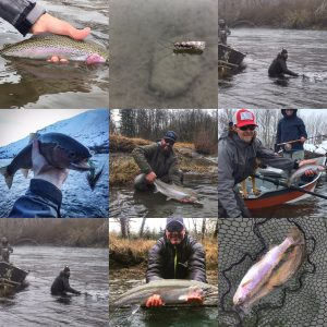 Rainbows and Steelhead from the Yakima and the Olympic Peninsula