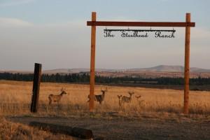 Bucks under sign